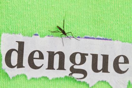 Dengue-Fieber wird durch Stechmücken übertragen