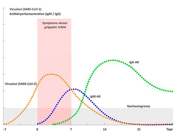 graphische Darstellung von Viruslast und Antikörpern