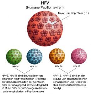 Papillomaviren lösen die Entstehung von Genitalwarzen aus
