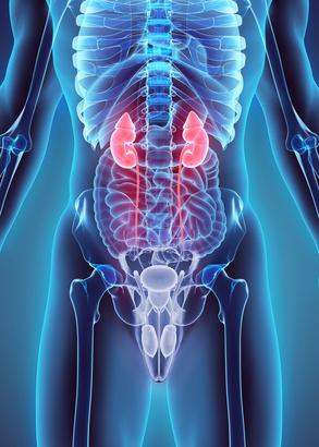 Nierenversagen, Niereninsuffizienz, chronisch