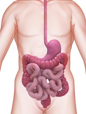 Verstopfung entsteht, wenn die Nahrung zu lange im Darm verbleibt