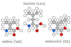 BCAA  – аминокислоты с разветвлёнными боковыми цепями