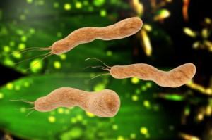 Häufigste Auslöser von Durchfall sind Bakterien oder Viren
